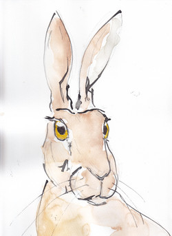 19 Hare 1 copy.jpg