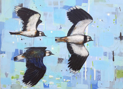 Acrobats of the Sky - lapwings 60 x 80 c