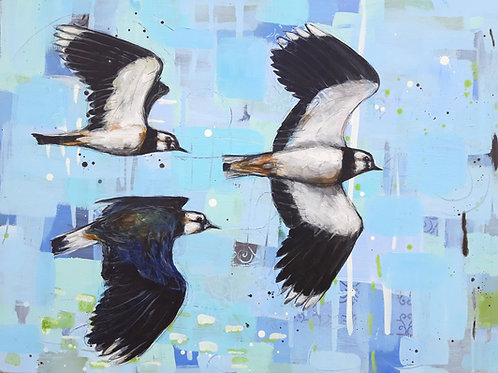 Acrobats of the Sky - Lapwings 60 x 80 cm on canvas