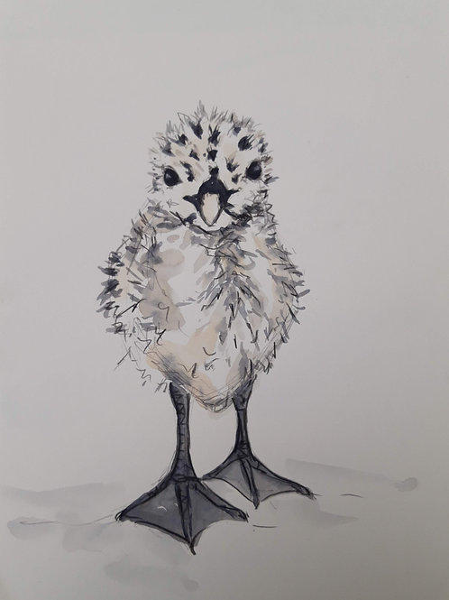Nestling Herring Gull
