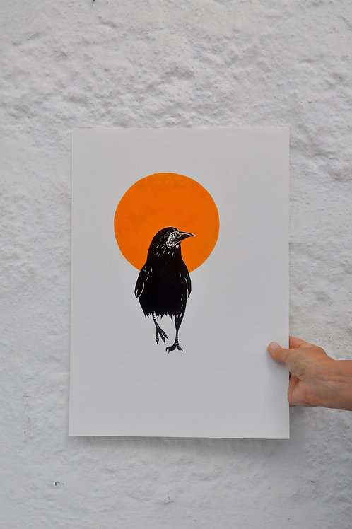 Rook in the Sun