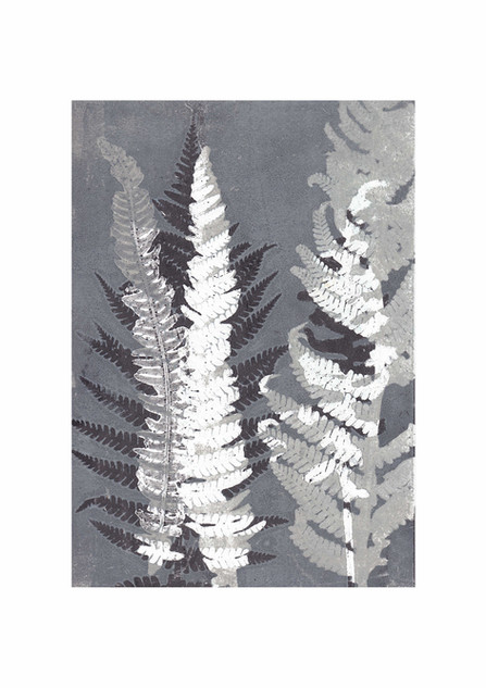 blue grey ferns