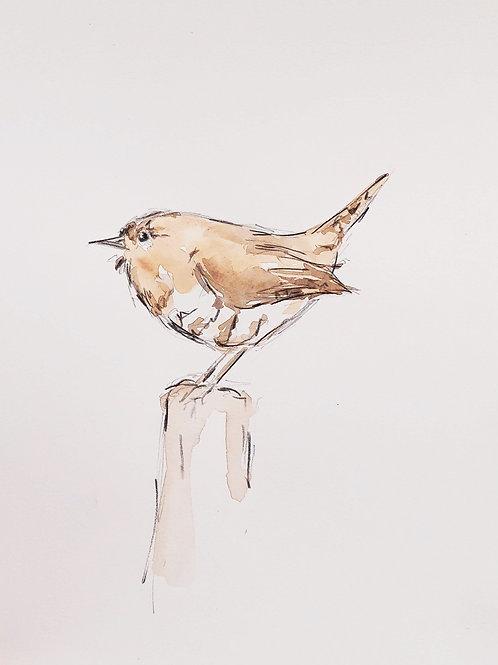 Wren Sketch2