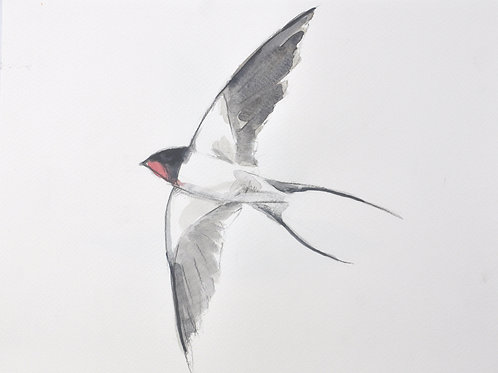 Swallow Original Painting