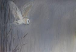 The Encounter Barn Owl
