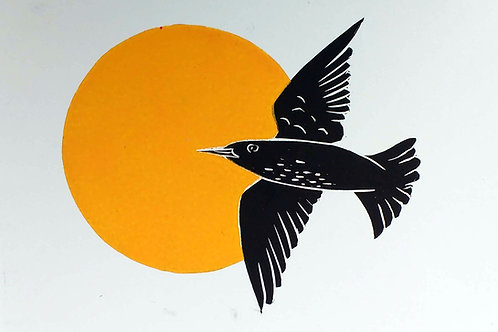 Starling with a Yellow Sun
