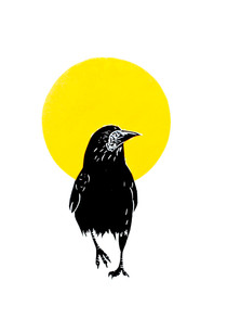 rook and the sun