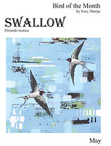 Swallow-1.jpg