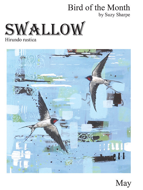 Bird of the Month May - Swallow