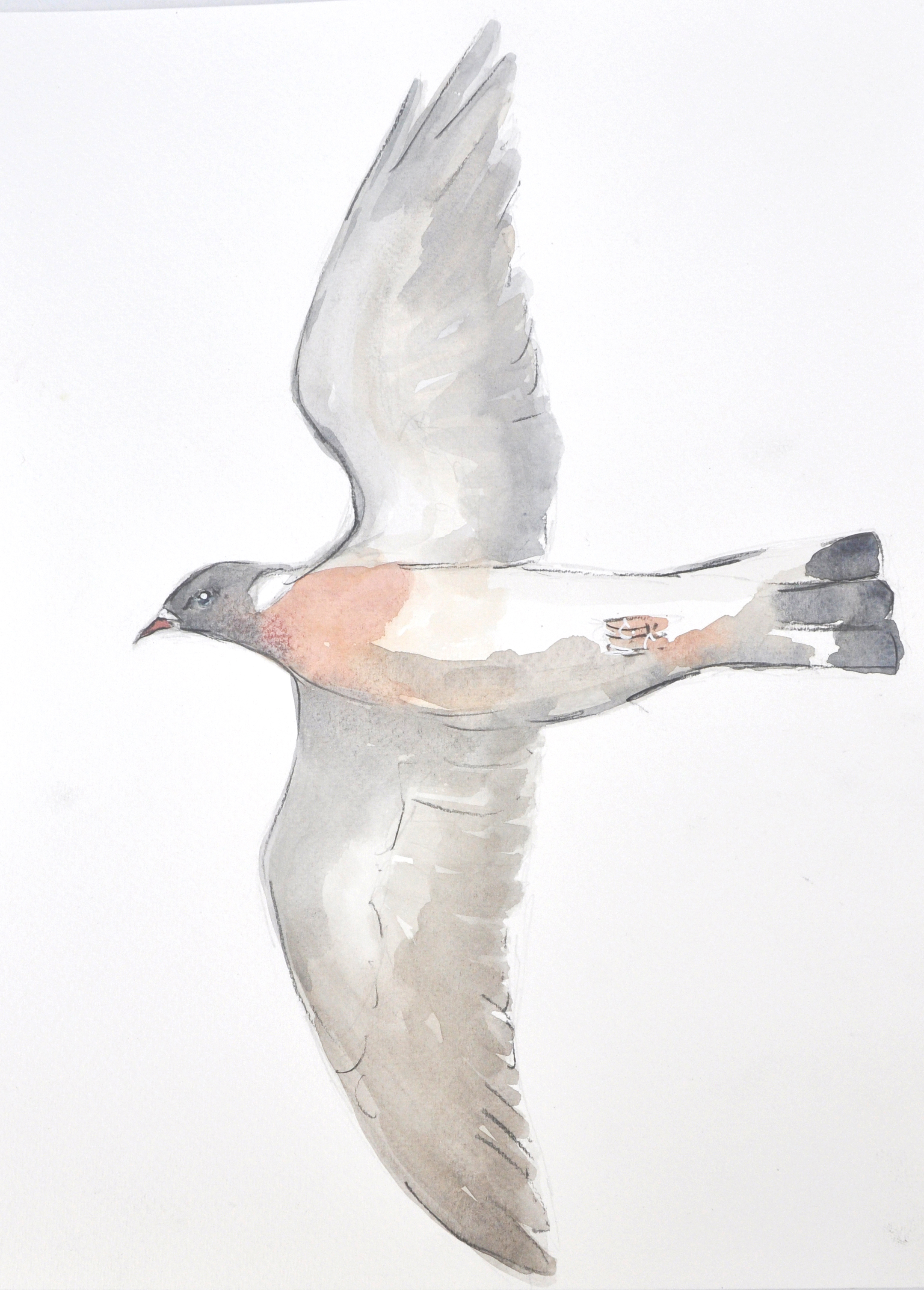Wood Pigeon Wildbird Watercolour Paintin