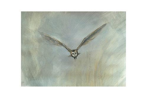 Barn Owl Over Marsh Print