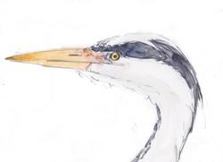 13 heron copy.jpg