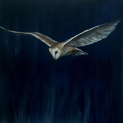 Still - Barn Owl