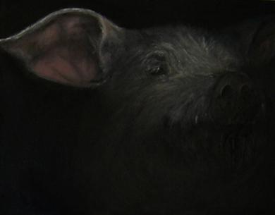 a pigs ear