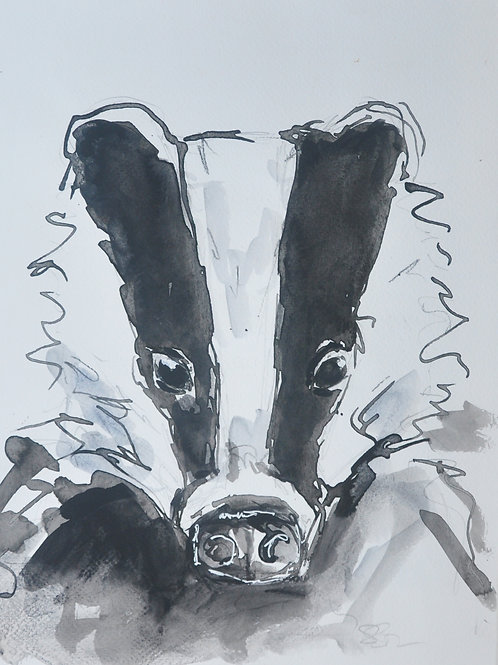 Badger Sketch in Ink