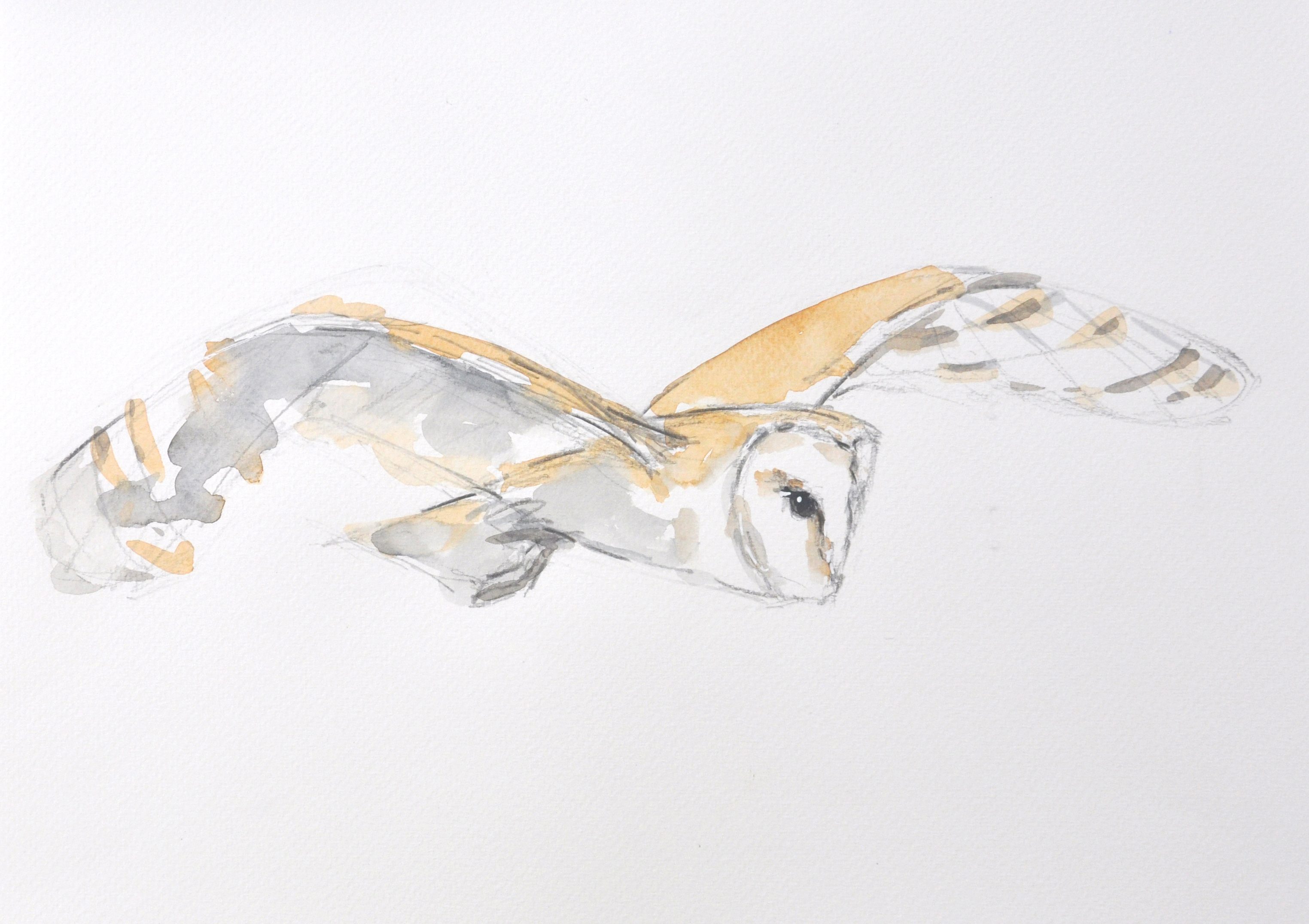 Barn Owl Wildbird Watercolour Painting