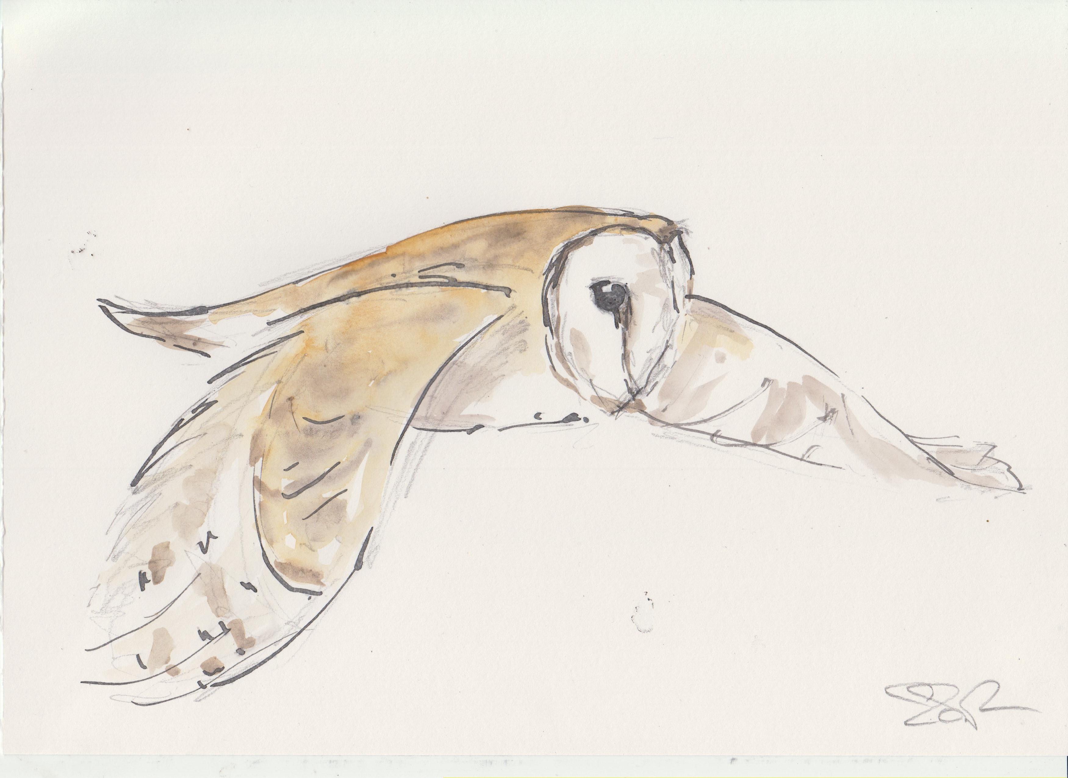 1 Owls (3).jpg