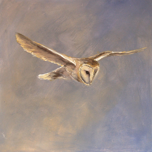 Soft Owl - Flying Barn Owl