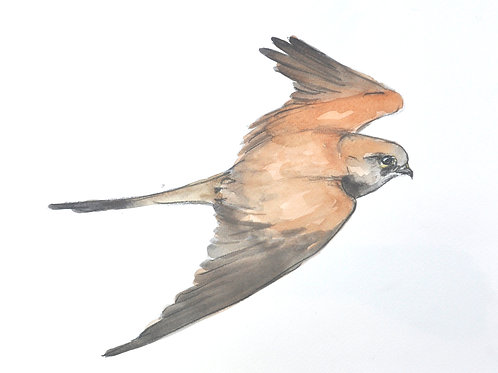 Kestrel Original Painting