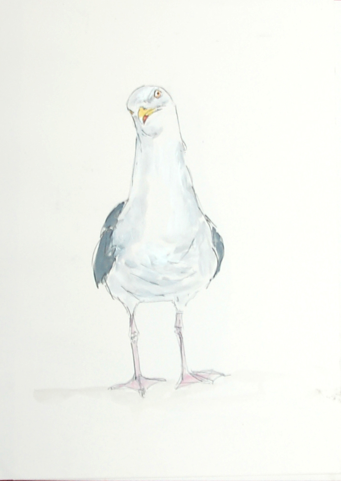 xnov Herring gull copy.jpg