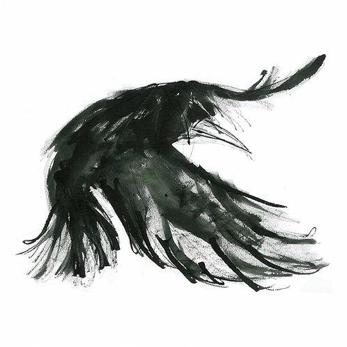 Long Wings - Flying Crow