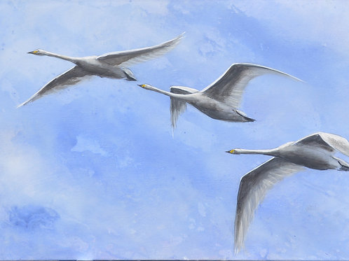 Beswick Swans Painting on Canvas