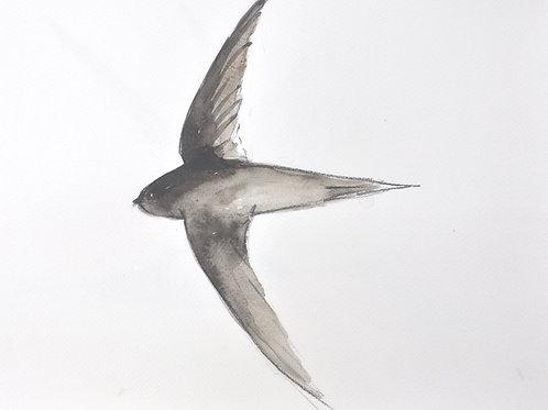 Swift Flying Original Painting