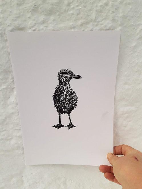 Herring Gull Nestling