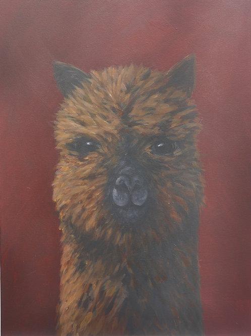 Alpaca Commission for Kat