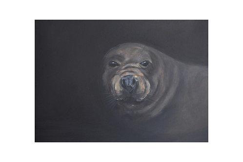 Into the Dark Grey Seal Print