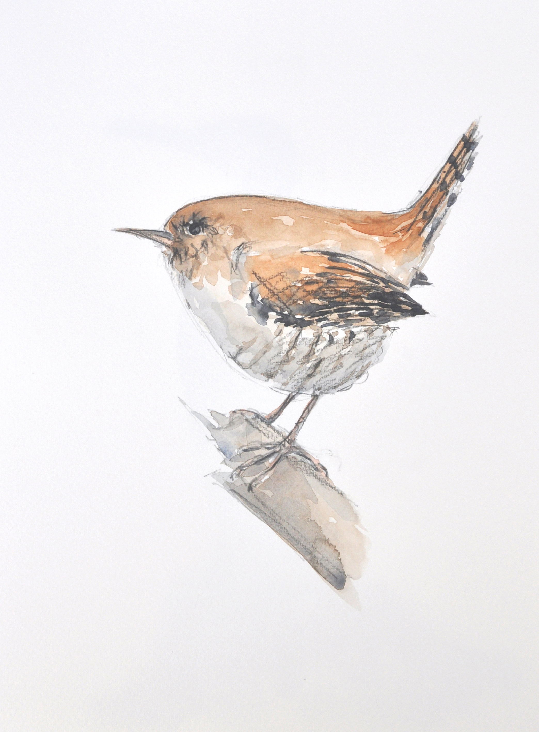 Wildbird Watercolour Painting (12)