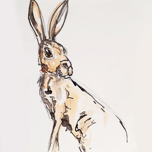 Curious Hare Sketch