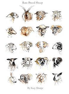 Rare Breed Sheep book 2020-1.jpg
