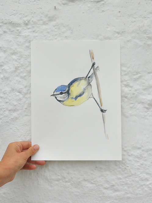 Blue Tit Original Painting