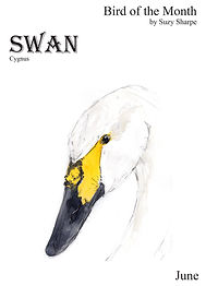 Swan ebook-cover.jpg