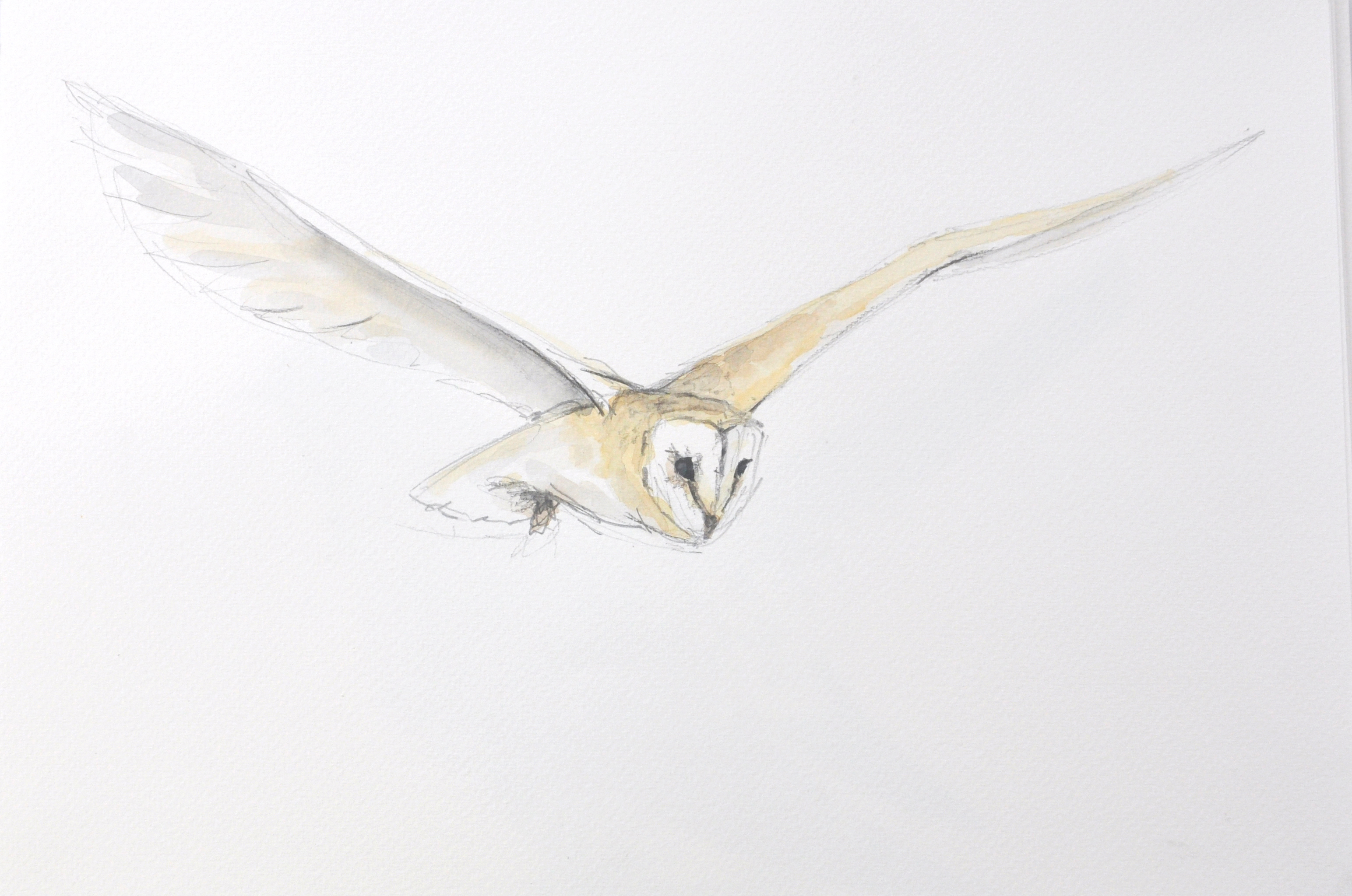 Barn Owl Wildbird Watercolour Painting