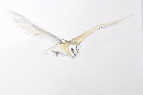 Original Painting Barn Owl
