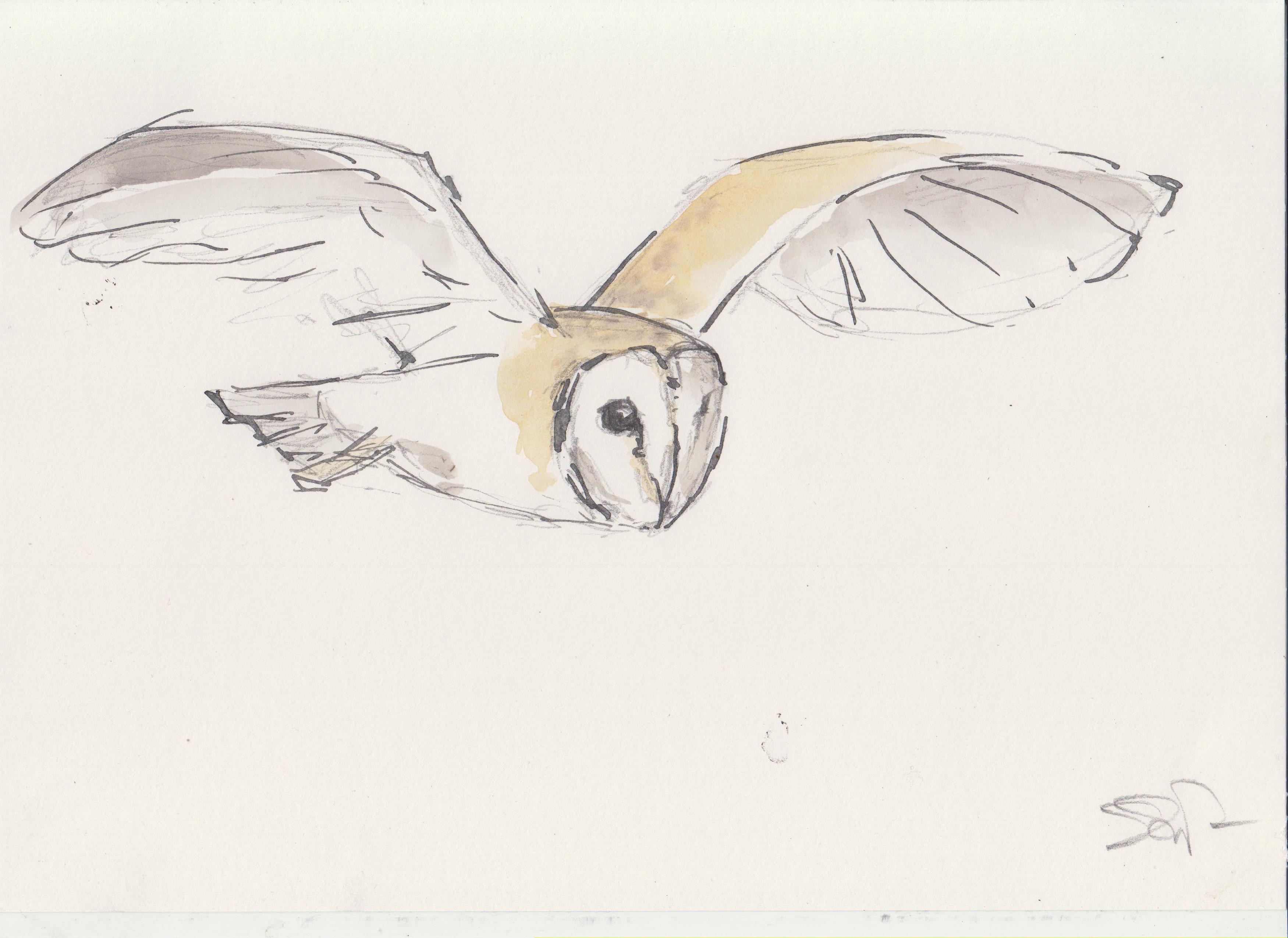 1 Owls (2).jpg
