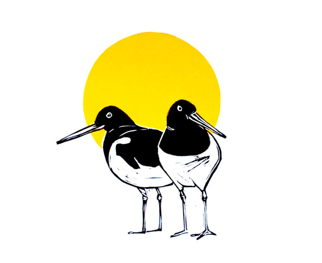 oystercatchers and the sun