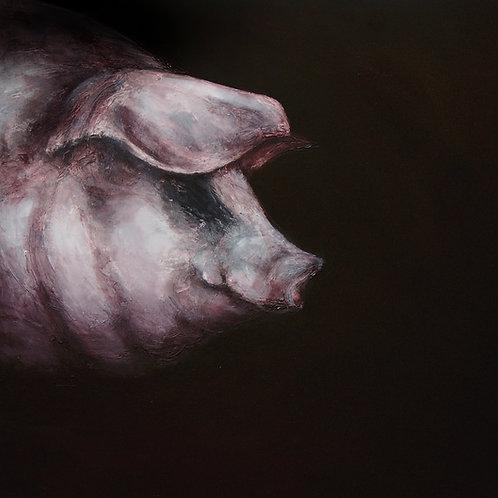Gloucester Old Spot - Pig