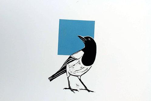Magpie looking over his shoulder blue squar