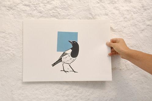Blue Sky Magpie