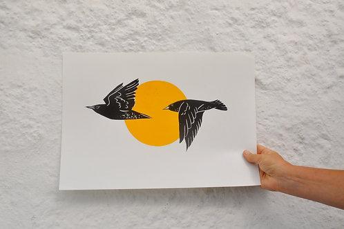 Starlings across the Sun