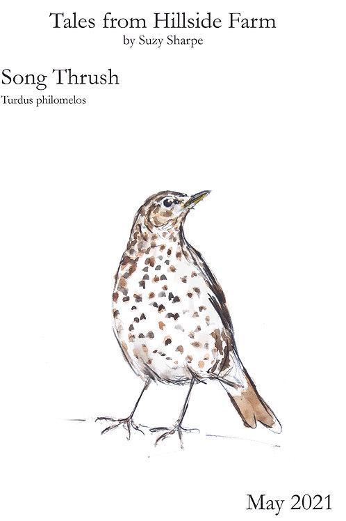 Tales From Hillside Farm & Thrush Bird of the Month