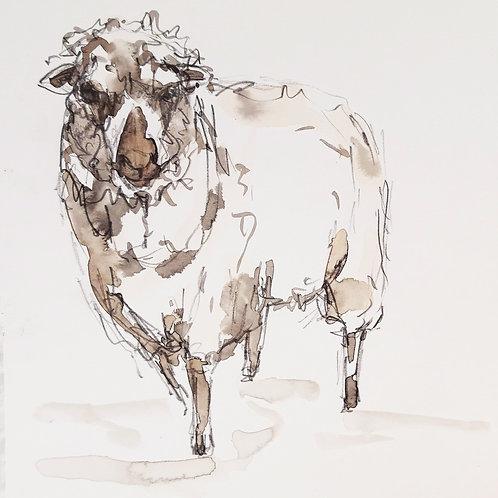 Lovely Walter Sketch