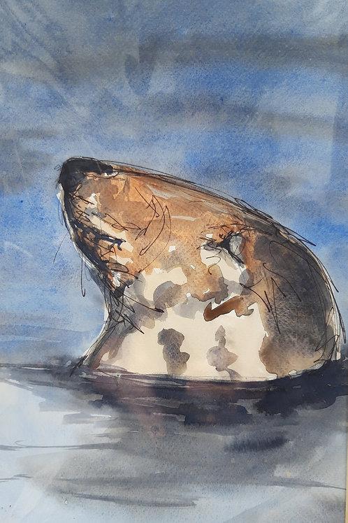 Grey Seal 2 Original Painting