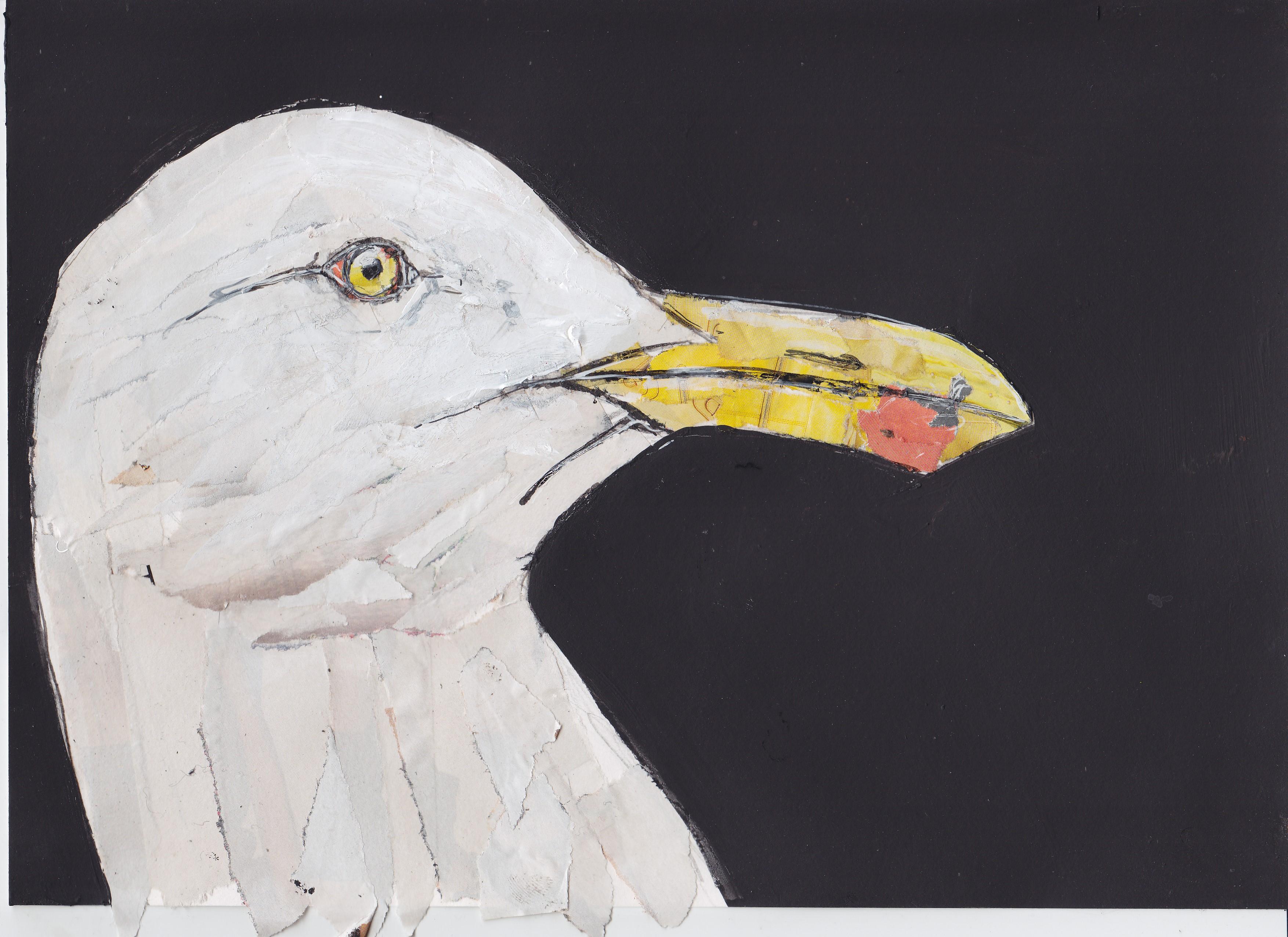 23 gull collage copy.jpg
