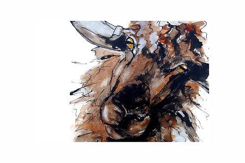 Longwool Sheep Print