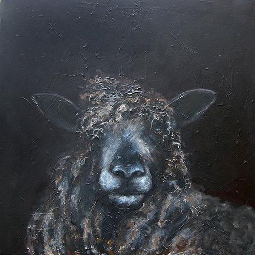 Isobel Leicester Longwool Ewe