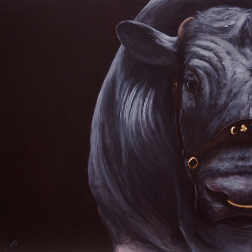 British Blue Bull